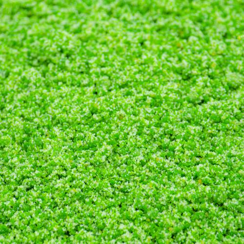 Pastoncino Morbido Verde
